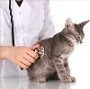 Ветеринарные клиники в Половинном